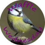 broadsheet-bluetit-th